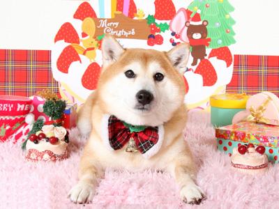 クリスマスむらまさ 1