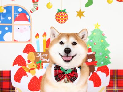 クリスマスむらまさ 2