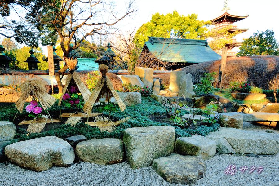 上野東照宮冬ぼたん苑3(1)変更済