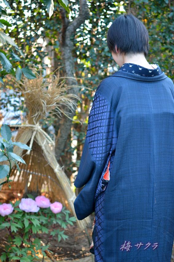 上野東照宮冬ぼたん苑3(11)変更済