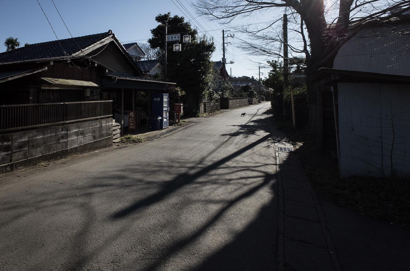 151219白井 (2 - 1)-24