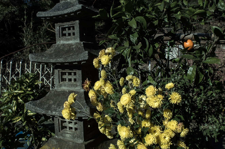 151219白井 (2 - 1)-29