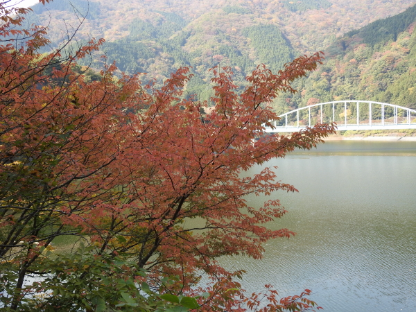 151107丹沢湖0005