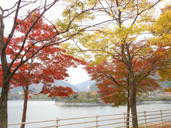 151107丹沢湖0011