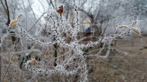 20160108_霧氷(1)
