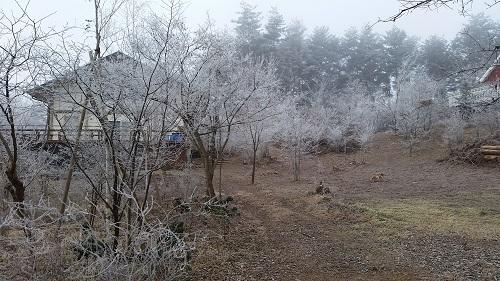 20160108_霧氷(5)
