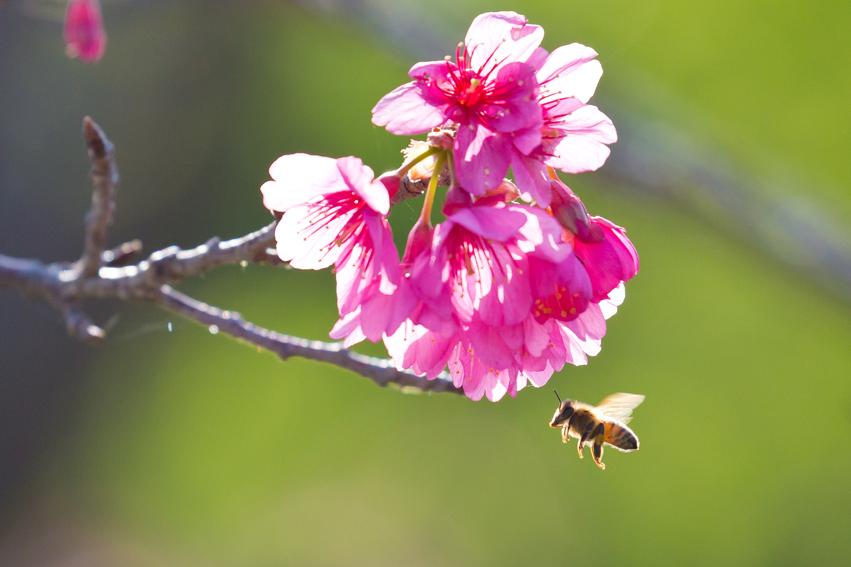 160209ミツバチ2