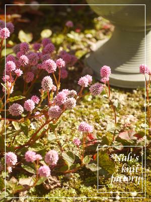 garden2015-116.jpg