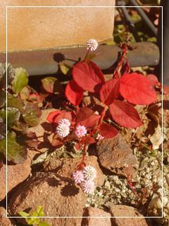 garden2015-117.jpg