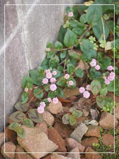 garden2015-118.jpg