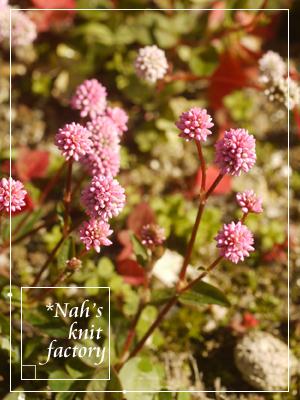 garden2015-119.jpg