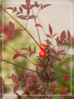 garden2015-124.jpg