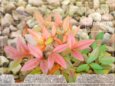 garden2016-03.jpg