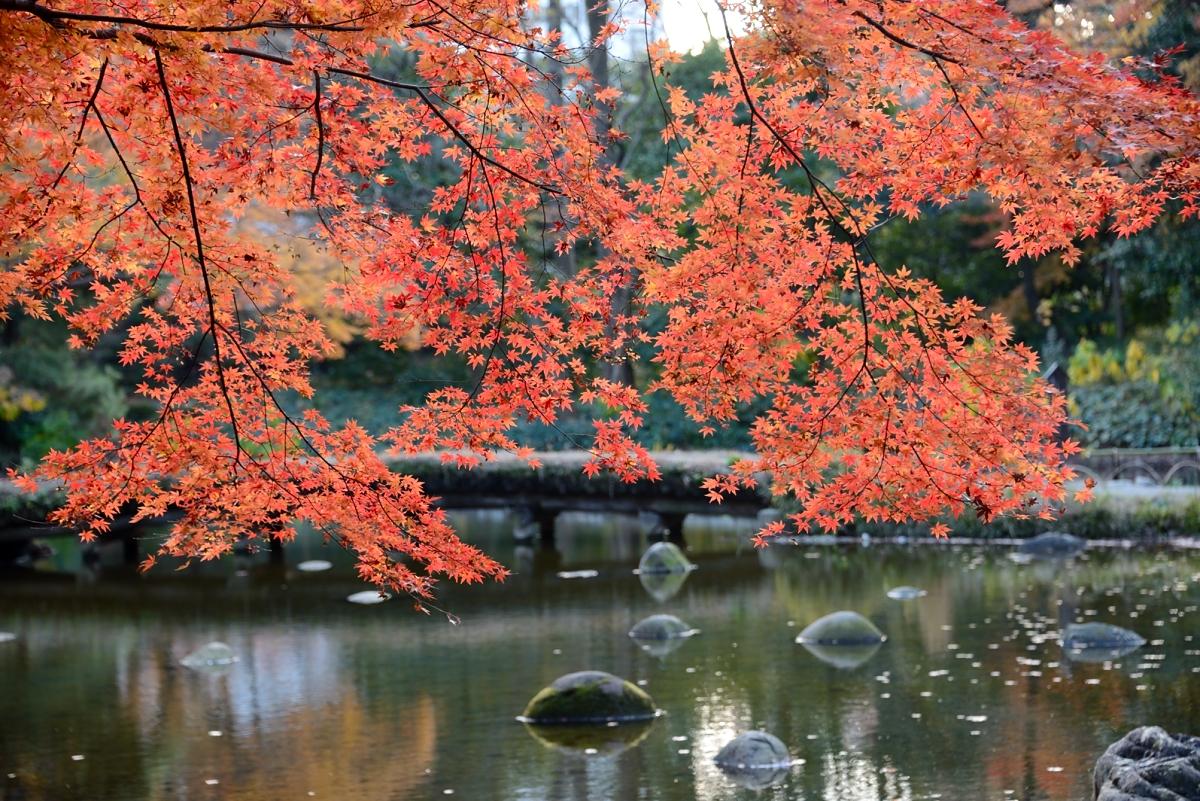 小石川後楽園__03
