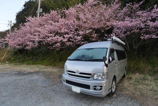 002桜の下でお目覚め