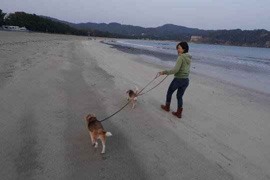 020夕方散歩