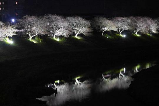 103夜桜2