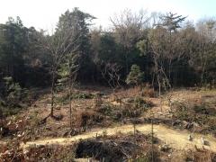 20160102南丘伐採区G