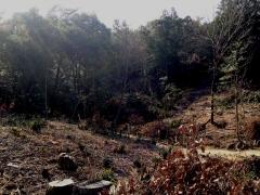 20160102南丘伐採区G2