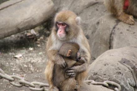 時々お母さんの腕の中で休んでまた遊びに行きます