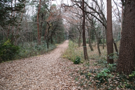 ウォーキング道路は枯れ葉のだらけ
