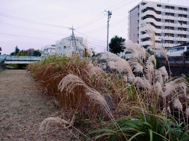 20151122_01.jpg