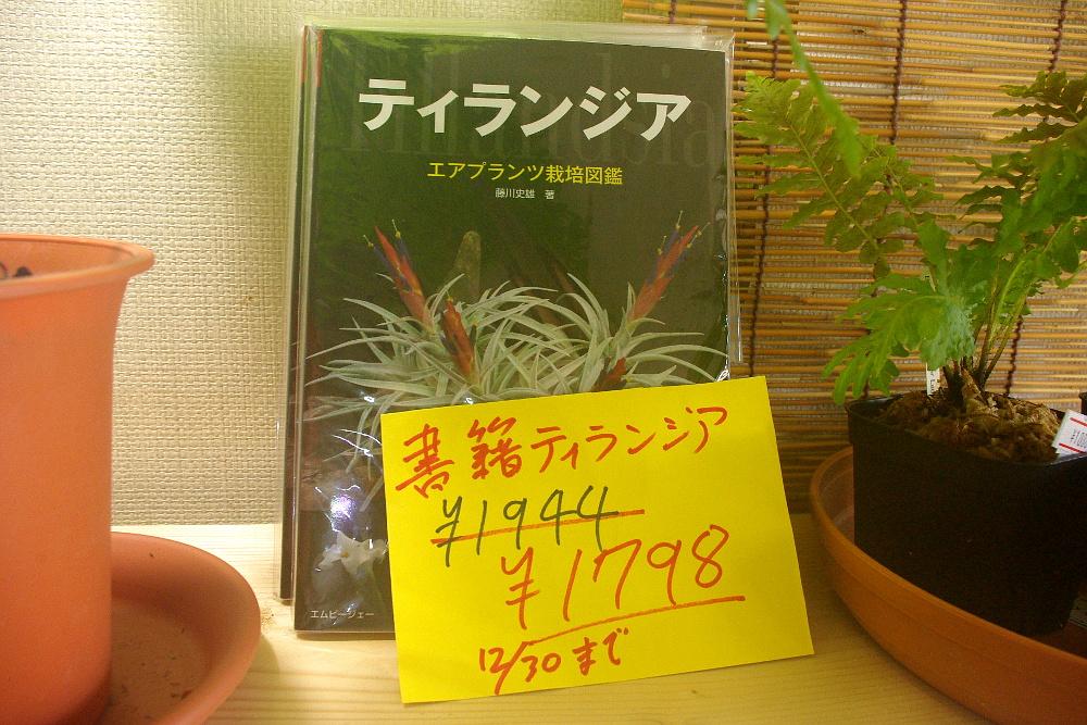 IMGP568701.jpg