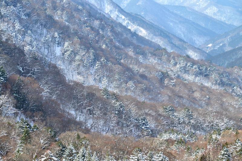 「雪の奥祖谷渓谷」