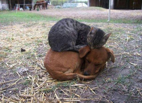 01-cats-sleeping-on-dogs