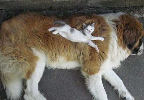 03-cats-sleeping-on-dogs