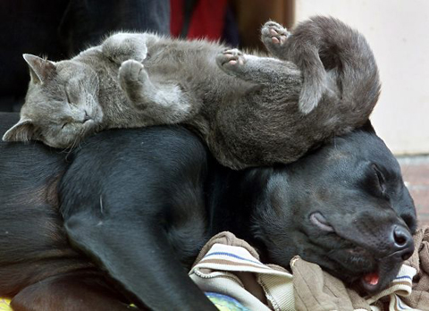 07-cats-sleeping-on-dogs