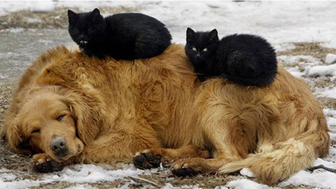 08-cats-sleeping-on-dogs
