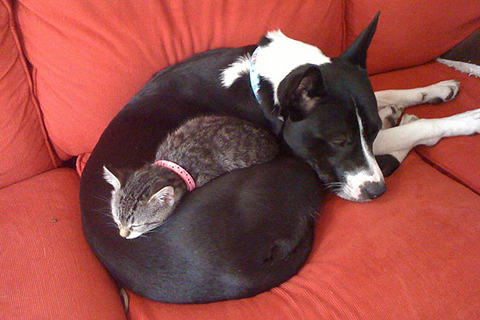 10-cats-sleeping-on-dogs
