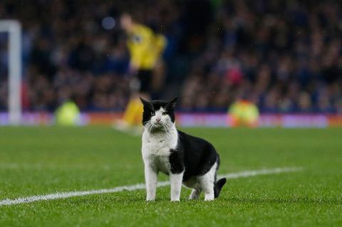 A-cat-on-the-pitch-during-the-game