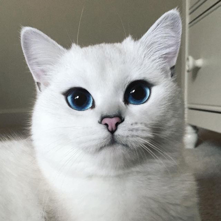 cobythecat