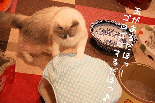 ゆっきー20151210-01