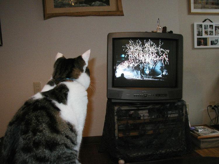 2006テレビ見物029
