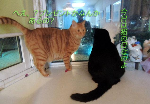 猫の日DSCN8532