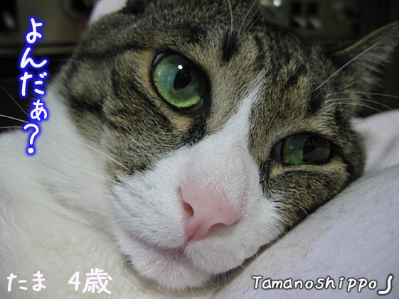変顔猫(寝起き?)たま