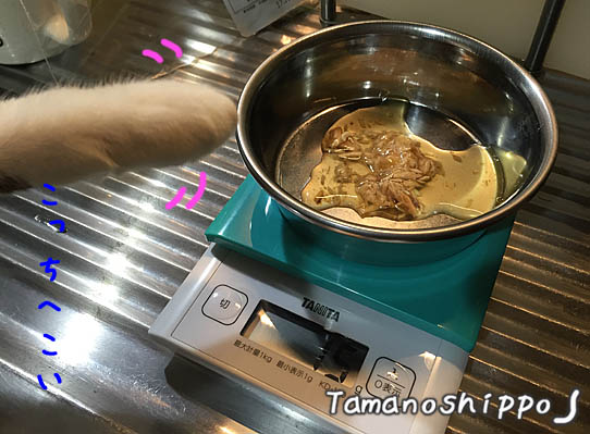 スープパウチのお皿と猫の手(ちび)
