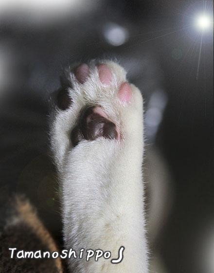 猫の肉きゅう(ちびのあんよ)