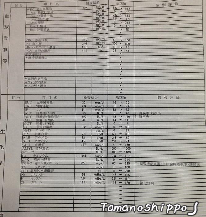 たまの血液検査(最後)