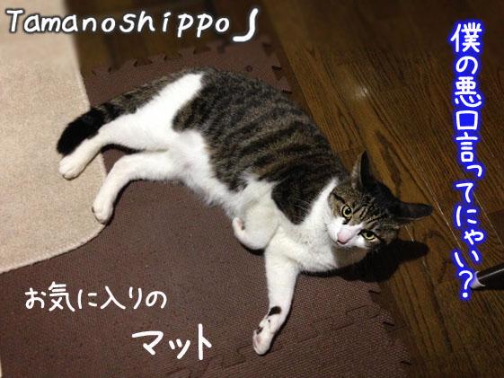 マットの上で寛ぐ猫(ちび)