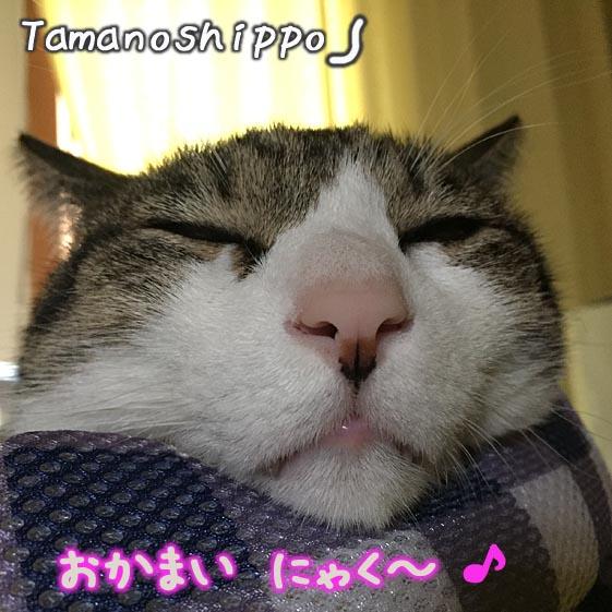 ちびの変なお顔(あごを乗せて寝る猫)