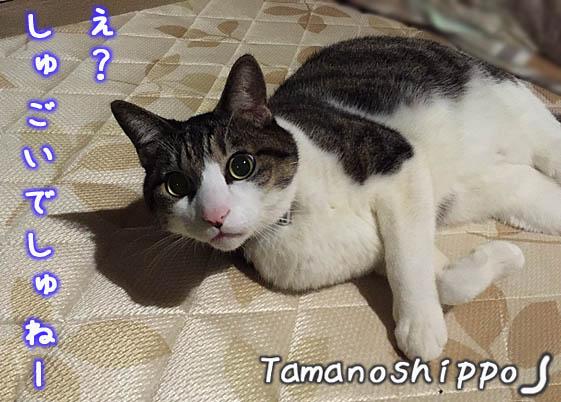 ビックリ!驚いている猫(ちび)