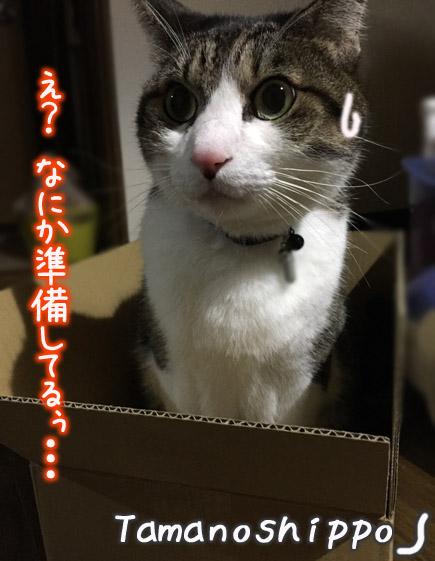 危機を感じている猫(ちび)ドキッ!