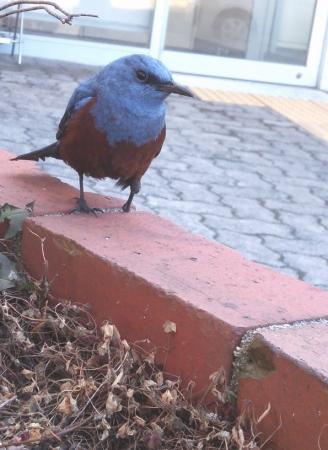 ごはんくれ鳥