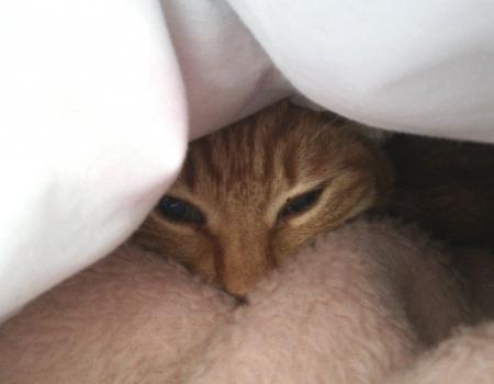 今日は寒い
