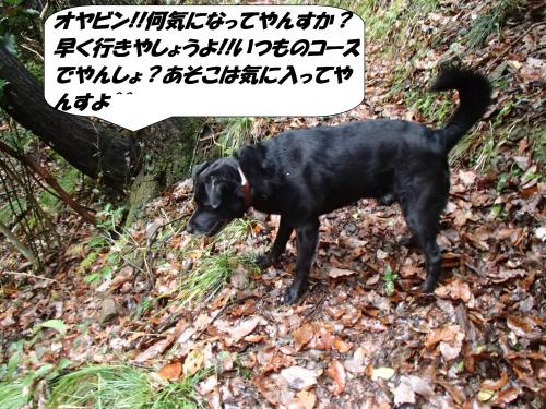 P1130048_convert_20160114102414.jpg