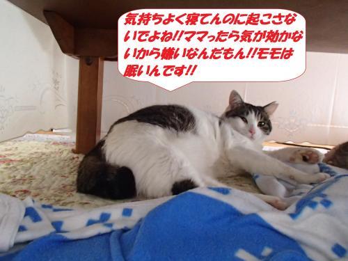 P1140062_convert_20160117081628.jpg